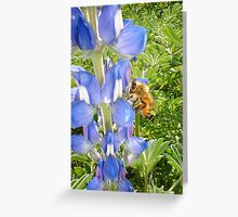 Bee With Wild Lupins Greeting Card