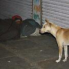 Accidental Guard Dog, Ahmedabad, Gujurat, India by RIYAZ POCKETWALA