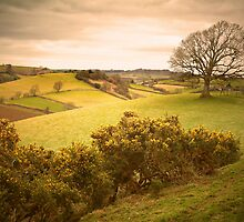 On A Hill In Dorset by Nigel Finn