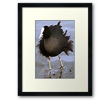 Ruffled Feathers - A Coot Battles Against the Elements Framed Print