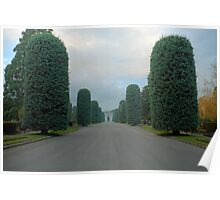 Tree Lined route at St Georges Cemetery Poster