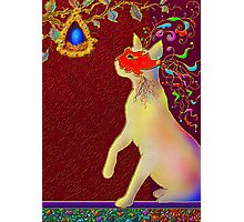'ROMEO CAT'  Impetuous Fire, Ice and Desire. Photographic Print