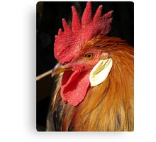Leghorn Rooster Canvas Print