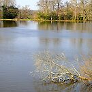 Fishing lake at Old Wardour Castle by Photography  by Mathilde