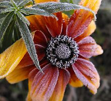 Brrrrr!! What A Cold Snap! by Tracy Faught