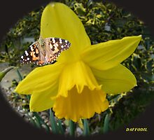 daffodil and butterfly by Joyce Knorz