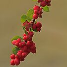 Berry Please To Meet You by Robert Abraham