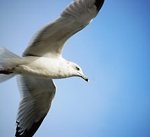 The seagull by Sherry Hunsberger
