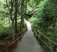 Bridge by Freshbottom