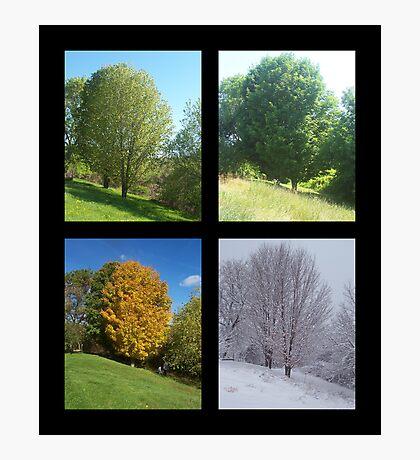 The Four Seasons Photographic Print