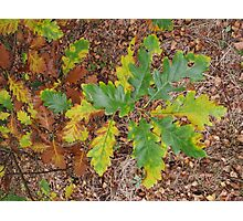 Autumnal Leaves Photographic Print