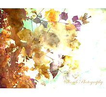 The autumn of your eyes  Photographic Print