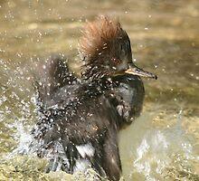 Having a splashing time. by Sandra O'Connor