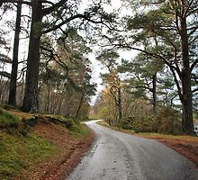The Road on the South Side by Lindamell