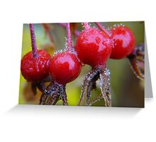 Winter Apples,(Frosted Rose-hips) Greeting Card