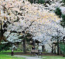 Under the Cherry Tree by Nancy Barrett