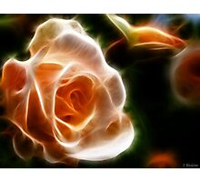 Last Rose of Summer Photographic Print