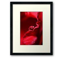 Velvet Red Framed Print