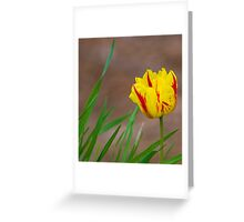 Holland Queen Tulip Greeting Card