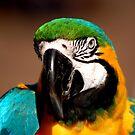 The parrot by loiteke