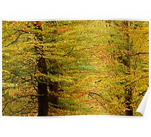 Autumnal tapestry Poster