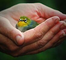 A bird in the Hand by Kym Howard