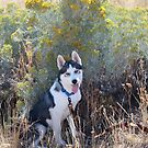 Checking out the Weeds by Deborah  Allen