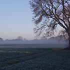 Morning mist over frost covered field by FelicityB
