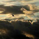 A bird flew by my window by Anima Fotografie