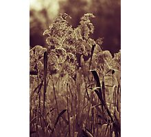 Caught In The Cattails Photographic Print