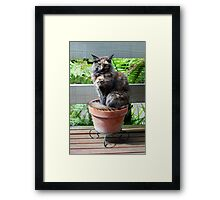 We Grow Pussy Cats Framed Print