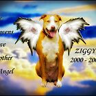 In Memory Of Ziggy by Zdogs