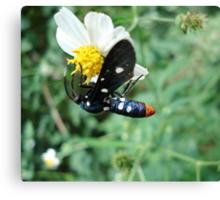 Polka-dotted Wasp Moth Canvas Print