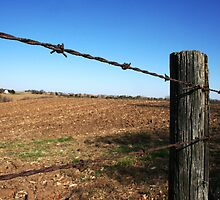 Wired fence- Iowa by Amanda Pokoyoway