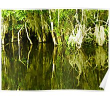 swamp reflection Poster