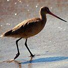 The bird by loiteke