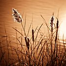 Copper Reeds by Kory Trapane