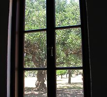 Window Series - The Orchard by Catherine Clemow