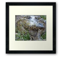 Staring death in the face Framed Print