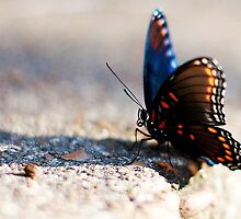 Butterfly Profile  by Awdrey