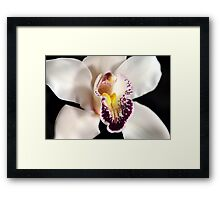 White Orchid Close Up Framed Print