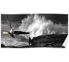 """""""Kite Surfing"""" Brahminy Kite Poster"""