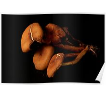 drying Mushrooms Poster