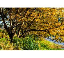 Glorious Autumn Photographic Print