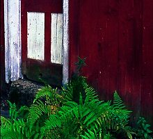 Country Door with Fern by peterrobinsonjr