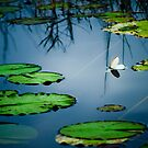 Lily Pads by Phillip M. Burrow