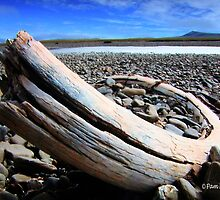 An Old Tusk by Pam Moore