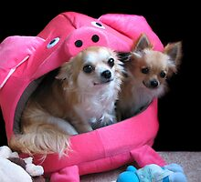 Two dogs in a pig. by MayJ