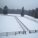 Horse Paddocks in winter, Bad Homburg by Lael Woodham