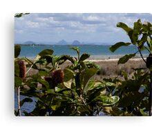 Banksia Beach - Bribie Island Canvas Print